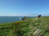 Outer head, walkers and plantlife