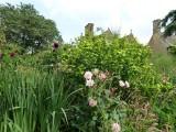 The Old Garden