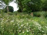 Lovely spot for bees