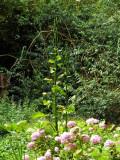 Interesting pods in the Lower Stream garden