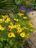 Mrs Winthrop's Garden