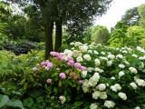 The Central Stream Garden