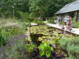 The Lily Pool garden