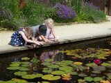 A close study of the Lily Pool