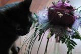 un bouquet pour la premier anniversaire de mon chat.JPG