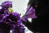 violet2a.jpg