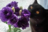 violet4a.jpg