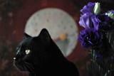 violet5a.jpg