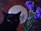 violet8a.jpg