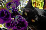 violet3pbase.jpg