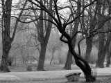 tree../12/