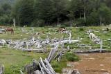 Tierra Dei Fuego National Park