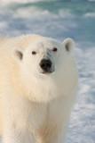 Svalbard Arctic Expedition 2011