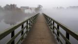Morning Fog 8