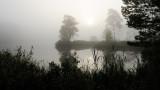 Vejlbo moor by morning 5