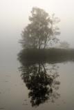 Vejlbo moor by morning 3