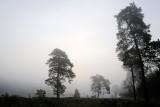 Vejlbo moor by morning 10