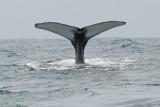 Humpback-Whale2.jpg