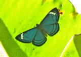Butterfly Condor-Mirador