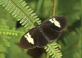 Butterfly Condor-Mirador3