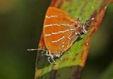 Butterfly Condor-Mirador4