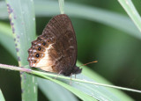 Butterfly-San-Isidro.jpg