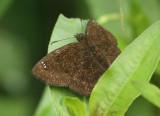 Butterfly-San-Isidro2.jpg