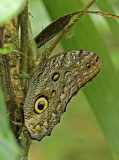 Butterfly-Silanche.jpg