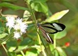 Butterfly-Tandayapa4.jpg