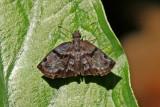 Butterfly-Sani4.jpg