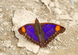 Butterfly-Sani6.jpg