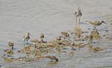Waders at Pacoa