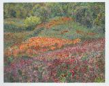 Mendocino Wildflowerss