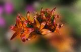 Explosion in orange
