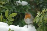 UK Birds