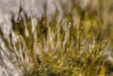 Feb 19 - Odd Moss