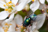 May 07 - Greenbottle