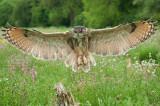 Barn Owl Centre