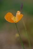 September 02 - Late Bloomer
