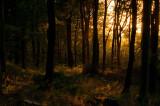 September 06 - Woody Sunset