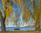 Bench & Willow