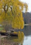 Fall Creek Willow