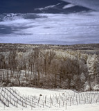 SIxmile Creek Vineyard