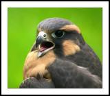 Beaky.jpg