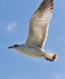bird in flight 3