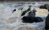 Great Falls Flooding