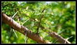 Serious Thorns