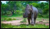 Not so happy Elephant