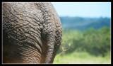 Elephants Rump