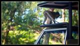 Truck Raider - by Gill